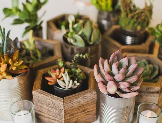 Mimic the essence of botanical gardens with natural DIY potted succulents for whimsical wedding centerpieces