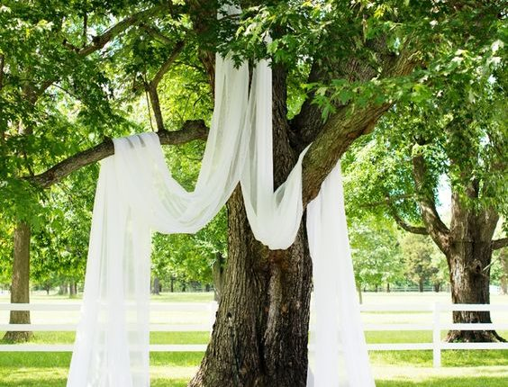 drape sheer curtains over a shaded tree for a simple yet beautiful wedding ceremony backdrop