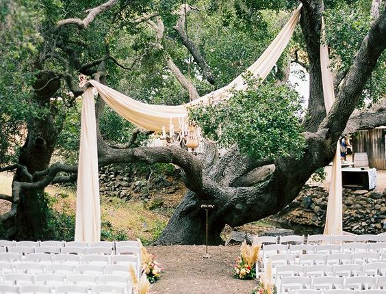 wedding tree ceremony setup